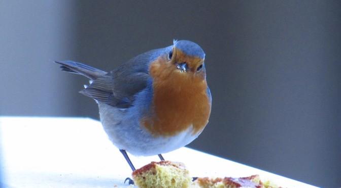 Birdcam: quando la natura va in diretta