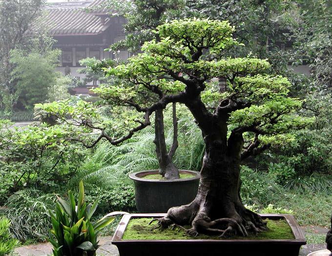 SUZUKI_Swift_ShortArticles_2012_MAY_gardens_011